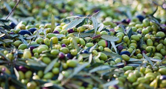 important-nutrients-in-olives